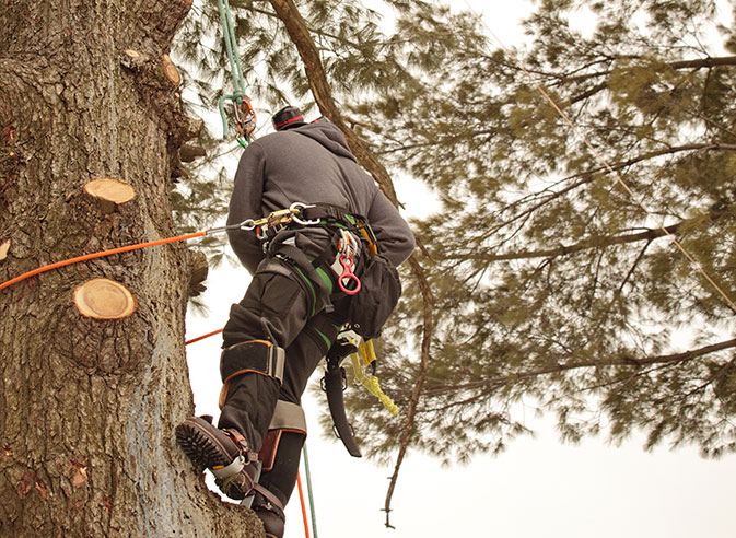 Top Notch Tree Removal LLC employee trimming a tree