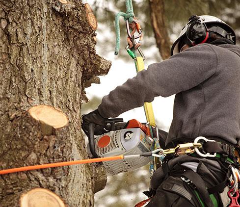 Top Notch Tree Removal LLC employee cutting a tree down