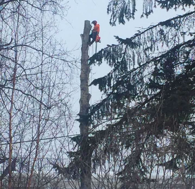 Top Notch Tree Removal LLC: Tree pruning in Fairbanks, Delta Junction and Salcha