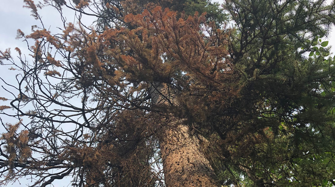Top Notch Tree Removal LLC: Emergency tree removal in Fairbanks, Delta Junction and Salcha